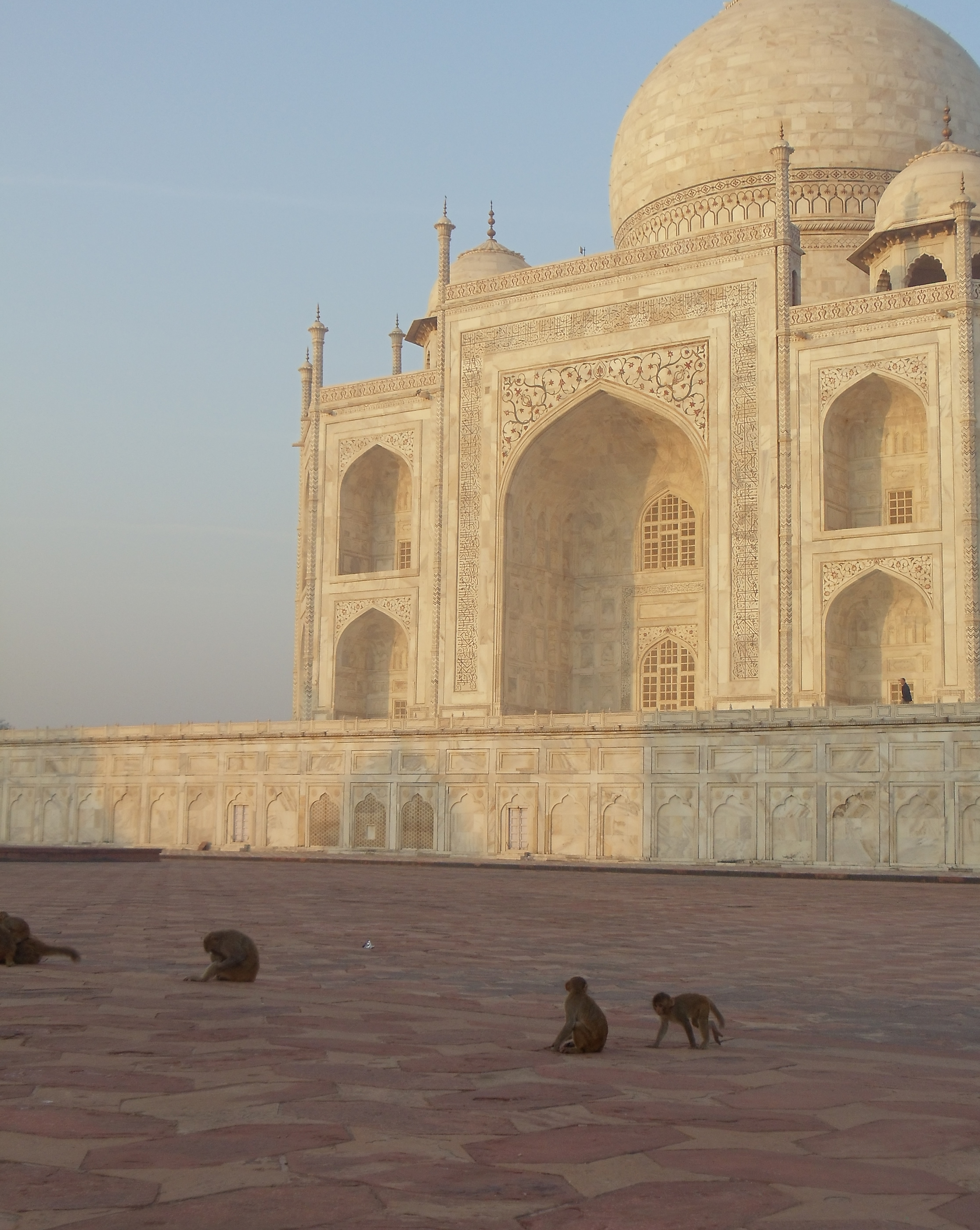 trip to taj mahal Marvel at the world's greatest monument to love, the taj mahal and magnificent agra fort on this unforgettable private tour accompanied by your own private guide.